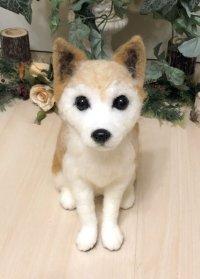 柴犬MIX